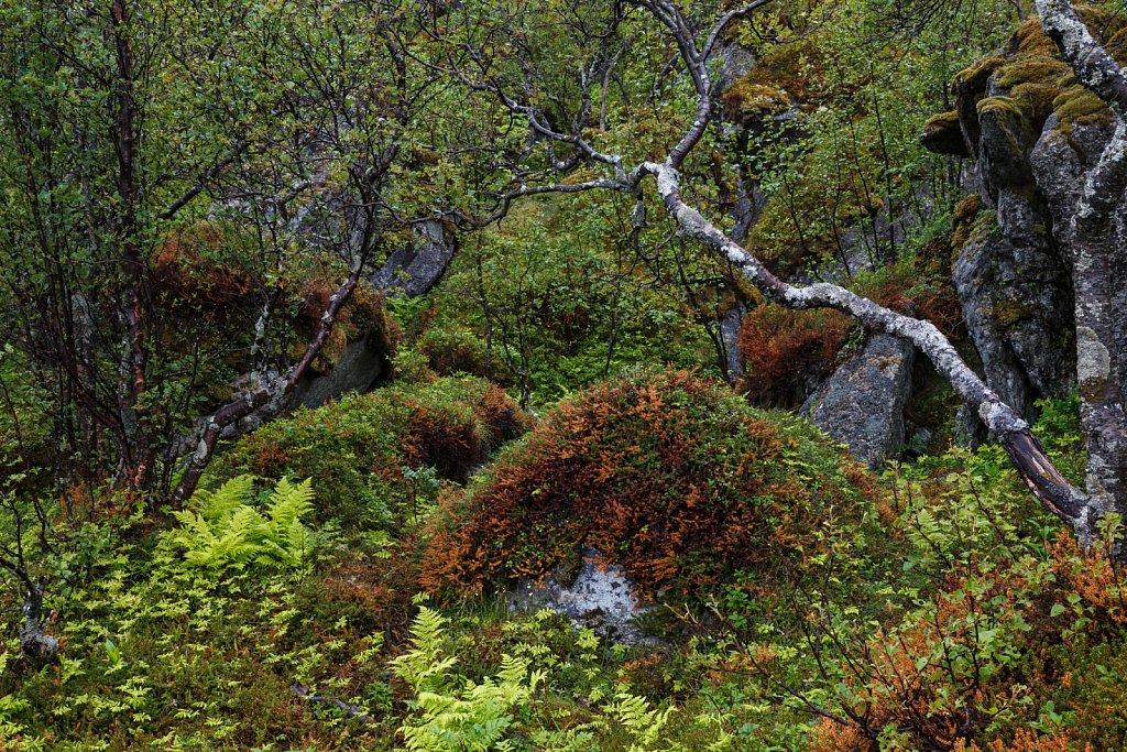 Tromsø Wetter