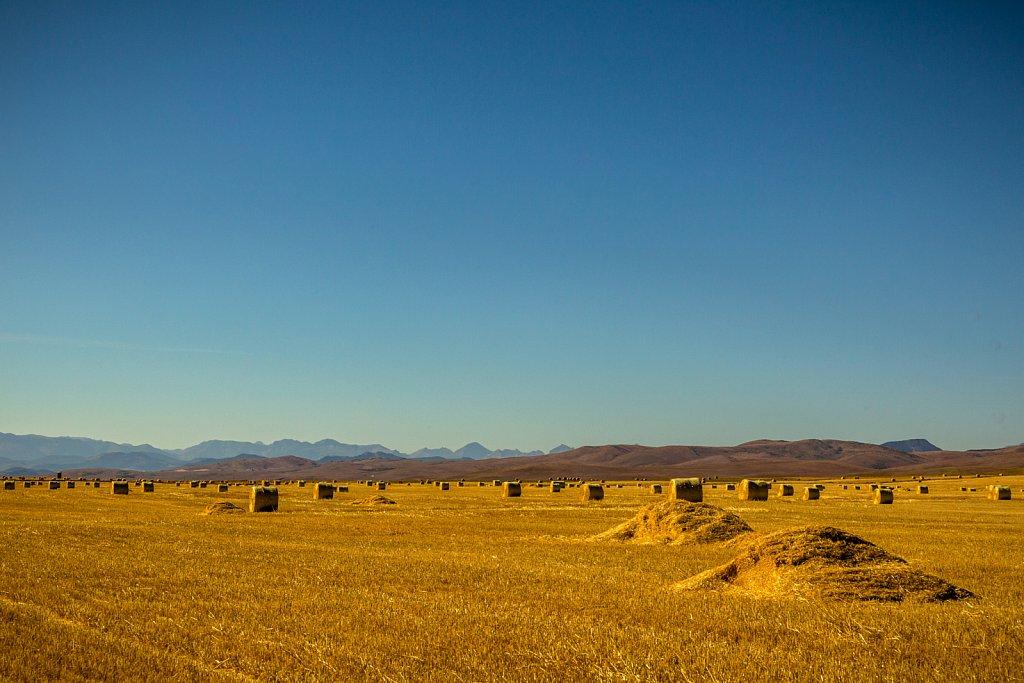 Nach der Ernte. Im Hintergrund die Rocky Mountains.